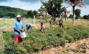 Togo: Mitglieder der Kooperative bei der Gartenarbeit, l. der Gärtner Agbarine